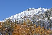 The summit of Alpet (2563m), Tinée valley, Mercantour National Park, Alpes-Maritimes, France