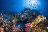 Underwater biodiversity in Misool, Raja Ampat, Indonesia