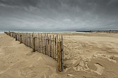 Lattice fence in chestnut wood to fix the sand on the beach of Calais in winter, Pas-de-Calais, Hauts de France, France
