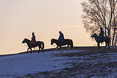 three Mongolian horsemen on a horse running in a meadow covered by snow, Bashang Grassland, Zhangjiakou, Hebei Province, Inner Mongolia, China