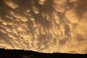 Mammatus at sunset on the Chablais massif. At the end of the storm, on August 1, 2018, hydrometores form on the side of a cumulonimbus, and are visible in a large part of the department 74, as well as the Lake Geneva region, Haute-Savoie, France