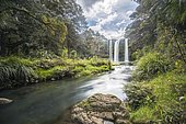Whangarei Waterfall, temperate rainforest, Whangarei, Northland, North Island, New Zealand, Oceania