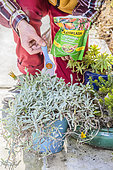 Add slow release fertilizer (coated fertilizer) to a pot in the spring.