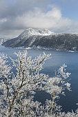 Givre sur les arbres entourant le lac Mashu, Hokkaido, Japon