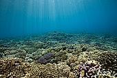 Pristine Hard Coral Reef, Fakarava, Tuamotu Archipel, French Polynesia