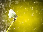 Daytime butterfly on the fly, San Cristobal de las Casas, Chiapas, Mexico.