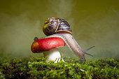 Gastropod on a fungus of the genus Russula. San Jose ecological park, Chiapas, Mexico.