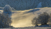 Winter atmosphere in the Jura mountains, Massif du Grand Colombier, Bugey, Ain, France