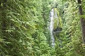 Proxy Falls, Willamette National Forest, Oregon, USA