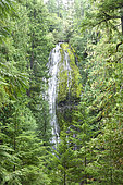 Proxy Falls, Willamette National Forest, Oregon, USA