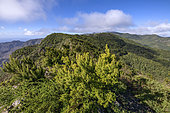 Windy and humid ridges swept by the trade winds overlooking the laurel forest of La Gomera Island, Garajonay National Park, Canary Islands