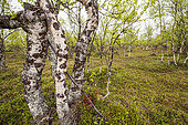 Boreal forest, Finland