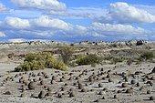 Round rocks on the Cancha de Bochas, Boccia course, Ischigualasto Nature Reserve, San Juan Province, Argentina, South America