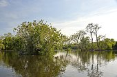 Wetland in the Kopacki Rit nature park, Osijek, Croatia, Europe