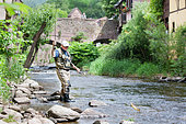 Fly fishing on the Weiss river, Capture of a brown trout (Salmo trutta fario), Kaysersberg, Haut-Rhin, Alsace, France
