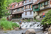 Fly fishing on the Weiss, Kaysersberg, Haut-Rhin, Alsace, France