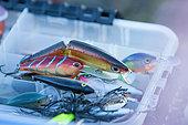 Artificial lures for predator fishing, Doubs, Franche-Comté, France