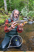 Fly fishing, Presentation of a large brown trout (Salmo trutta fario), Doller Valley, Haut-Rhin, Alsace, France