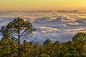 Sea of clouds on the island of Tenerife. The northeast trade winds regularly cause the formation of a dense cloud sea on the flanks of the Teide, strato volcano on the island of Tenerife, in the Canaries.