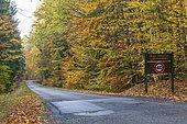 Route forestière de Landerberg en automne, Moselle, France
