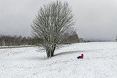 Little girl sledding in a snowy meadow in winter, Moselle, France