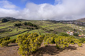 Agricultural landscape and clouds on the island of El Hierro in the Canaries. San Andres region - in the foreground of junipers