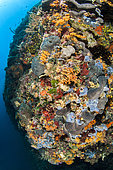 Coralligenous wall in Kornati National Park, Croatia