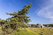 Two-storey borie on the Caussols plateau, Préalpes d'Azur Regional Natural Park, Alpes-Maritimes, France