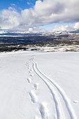 Ski and footprints on the Caussols plateau, Préalpes d'Azur Regional Natural Park, Alpes Maritimes, France