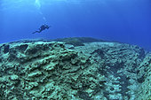 Diver above the seabed, in the Gulf of Bomba, Libya