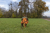 Stalking before hunting, hunting little game, Rhine forest, Alsace, France