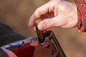 charging with cartridge, hunting small game, Rhine forest, Alsace, France