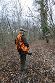 Stalking before hunting, hunting big game, Rhine forest, Alsace, France