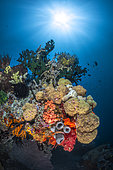 Coral reef under the sun of Raja Ampat, Four kings, Misool, Indonesia