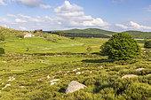 Plain of Mas Camargues, the Causses and the Cévennes, cultural landscape of Mediterranean agro-pastoralism, classified World Heritage by UNESCO, Cévennes National Park, Classified Biosphere Reserve by UNESCO, Lozère, France