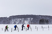Snowshoeing in gusts of wind near the Déroc waterfall, Aubrac Regional Natural Park, Lozère, France