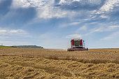 )Harvest of a Bere field, Hauts de France, France
