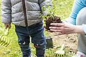 Child planting in spring, Hauts de France, France