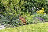 Mixed-border in a garden in spring, Pas de Calais, France