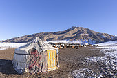 Sheepfold, Yurt in the snow, goat and sheep farming, Valley with snow and rocks, Altai mountains, West Mongolia, Mongolia