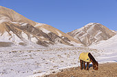 Horse with a blanket against the cold, Valley with snow and rocks, Altai mountains, West Mongolia, Mongolia
