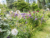Allium aflatunense, Euphorbia characias ssp wulfenii 'John Tomlinson', Rosa rugosa 'Exception', Rosa 'Opalia', Parc floral Vincennes, Paris, France