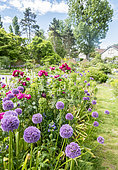 Allium aflatunense, Euphorbia characias ssp wulfenii 'John Tomlinson', Rosa rugosa 'Exception', Parc floral Vincennes, Paris, France