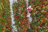 Little girls in a poppy field, photographed by a drone, spring, Hauts de France, France