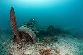 Japanese Kate Bomber Wreck Nakajima B5N, New Ireland, Papua New Guinea