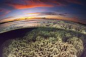 Récif de corail au coucher du soleil, Baie de Balgai, Nouvelle-Irlande, Papouasie-Nouvelle-Guinée