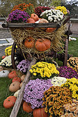 Decorations, cart, cucurbits in autumn, interior courtyard of museum, Le Chateau en Couleur, castle of the Dukes of Wurtemberg, Montbeliard, Doubs, France