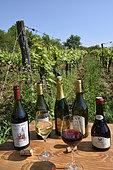 Bottles, glasses, pinot, savagnin, straw wine, crémant and chardonnay, Jura wines, South Revermont vineyard, Orbagna, Jura, France