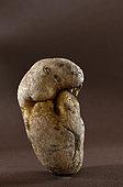 Potato (Solanum tuberosum), tuber shaped animal, vegetable garden, Belfort, France