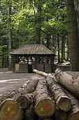 Shelter, forest, Pépinière du Paradis, Ormont massif, Nayemont-les-Fosses, Vosges, France
